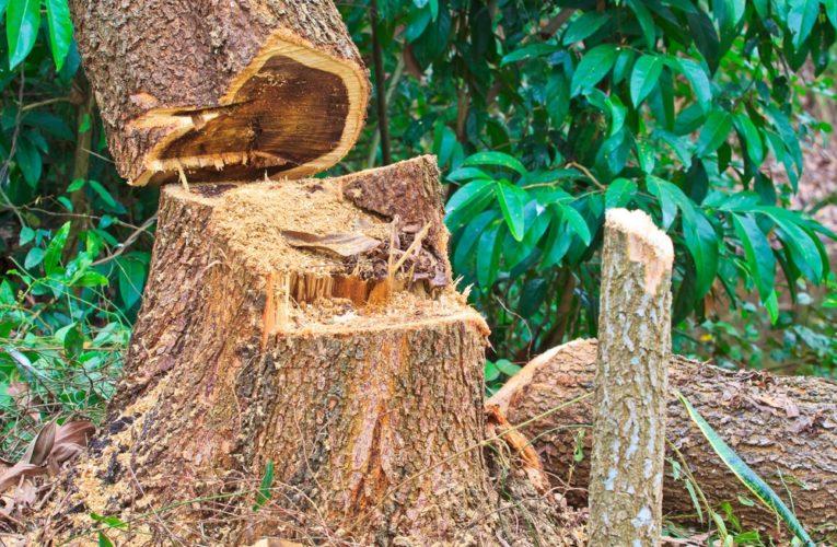 Под Днепром вырубили деревьев на миллион гривен
