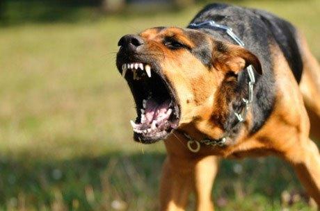 В Днепре собака напала на ребенка