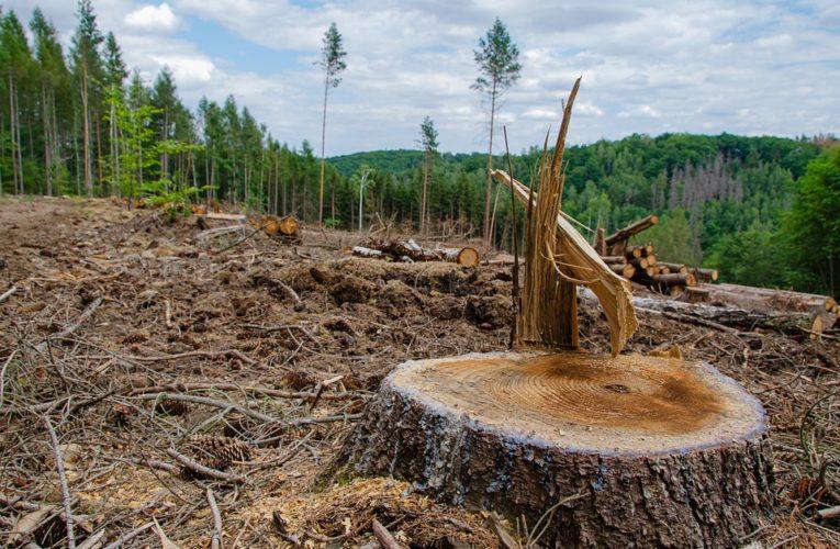 На Днепропетровщине фермеры восстали против лесорубов