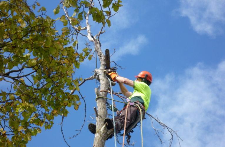 В Днепре будут удалять аварийные деревья: временно перекроют улицу Исполкомовскую
