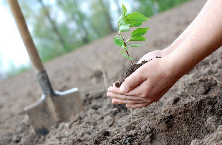 Сколько молодых деревьев собираются высадить в Днепре