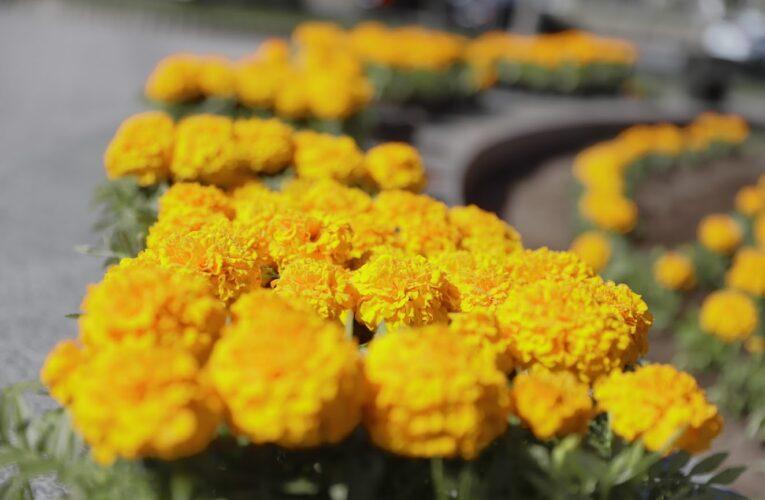 В Днепре до 9 мая высадят более 67 тысяч цветов