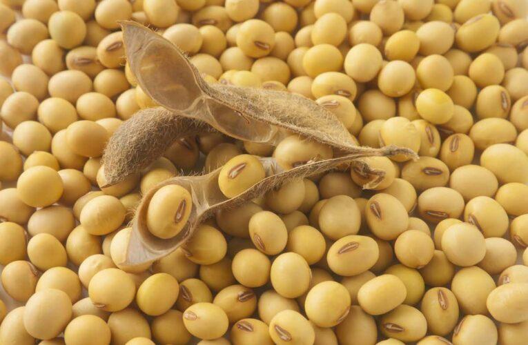 Українців годують ГМО?