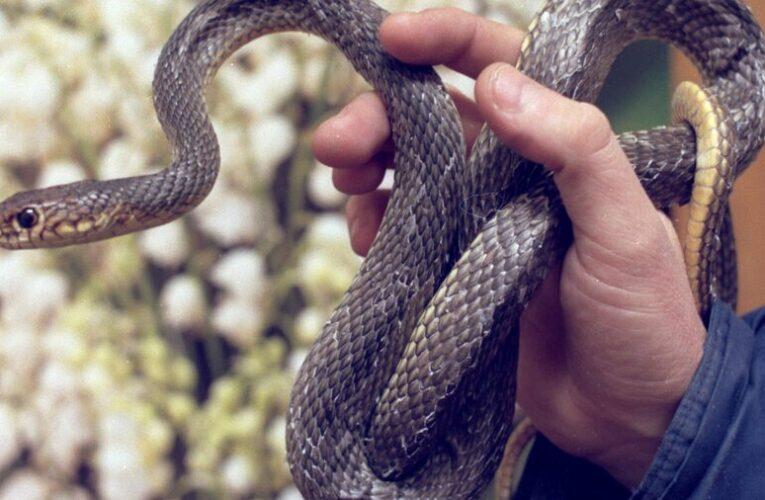 В Днепре змея заползла в магазин