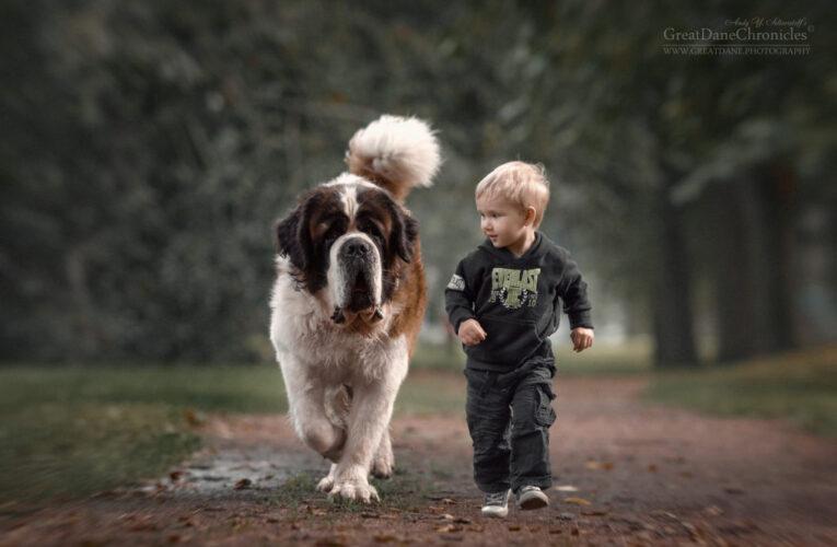 В Днепре на День города пройдет «Марш собачников»